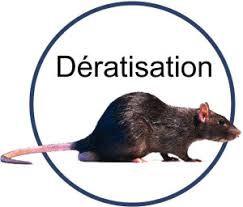 Dératisation
