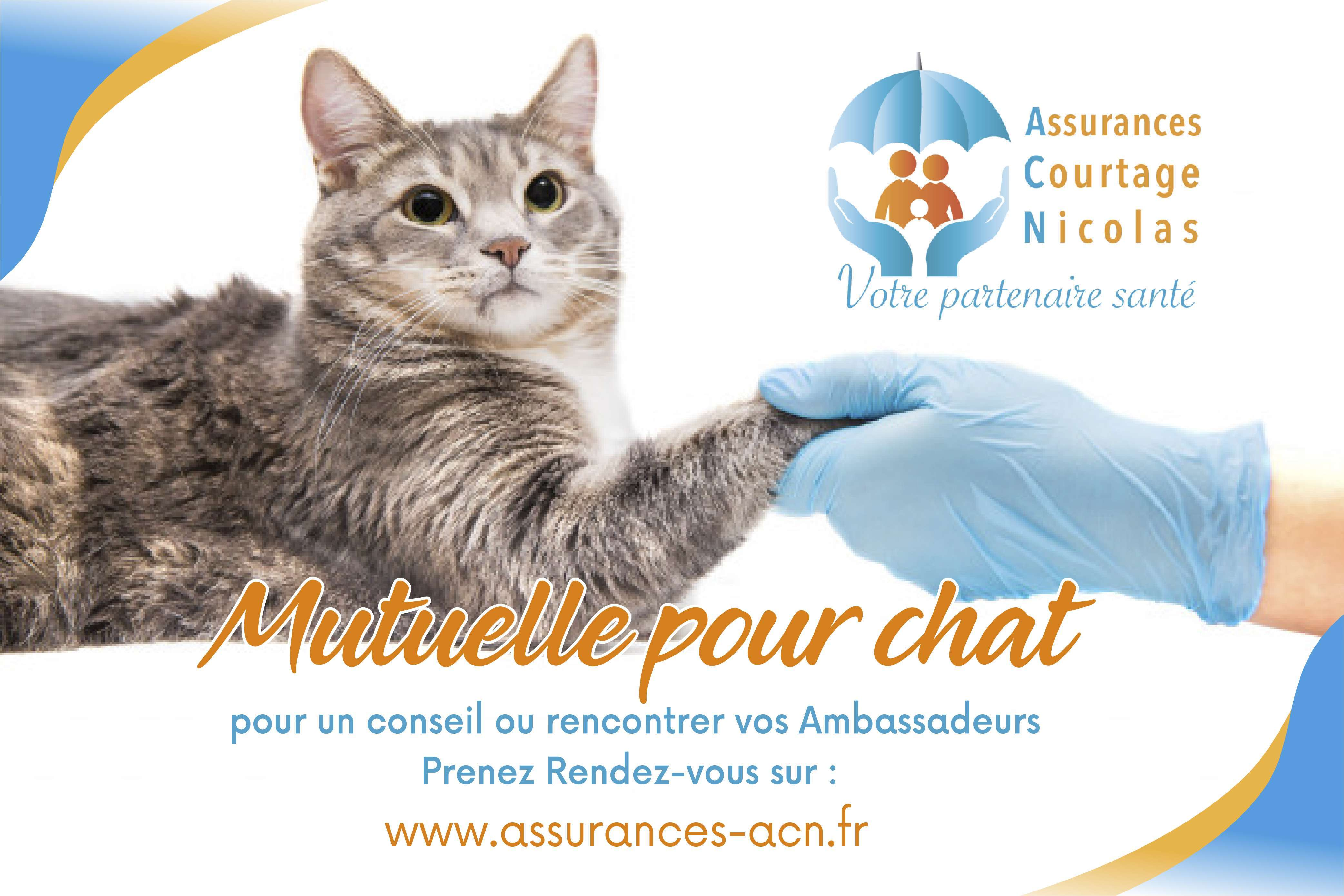 Mutuelle Chat